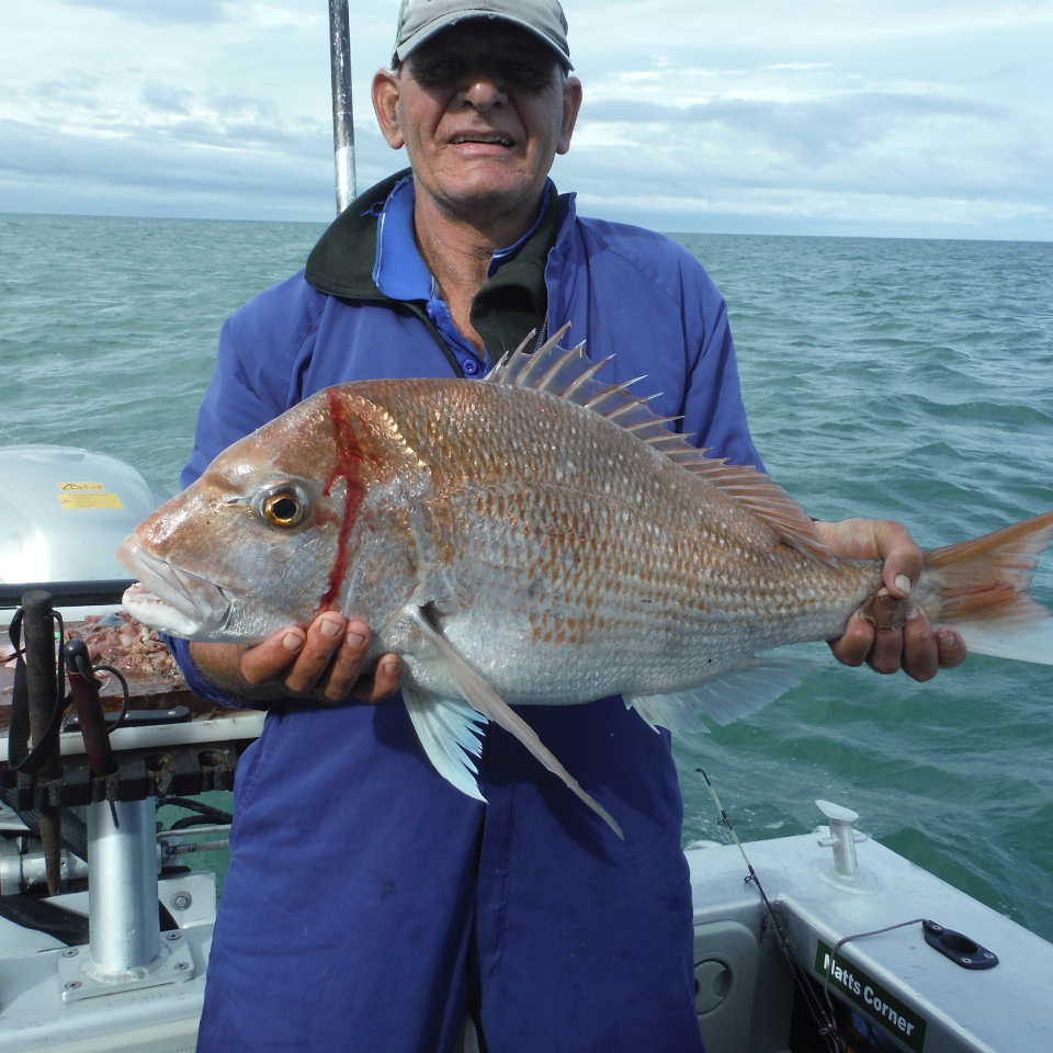 Matt Shaws Snapper and Buttons and Bow March 2016 010